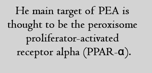 He main target of PEA is thought to be the peroxisome proliferator-activated receptor alpha (PPAR-α).